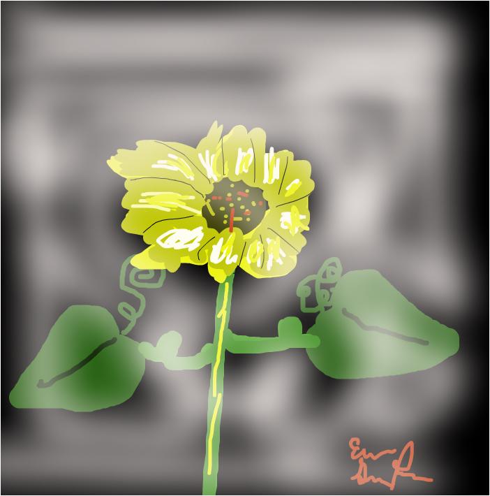 foggy flower