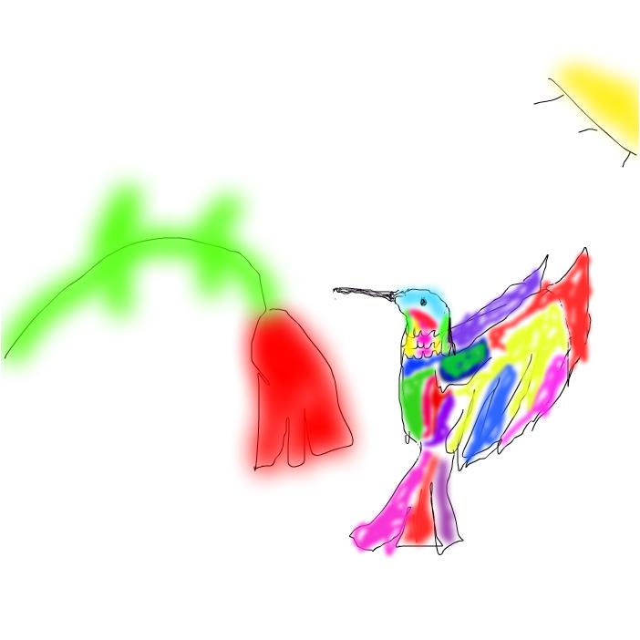 fiery thoated hummingbird