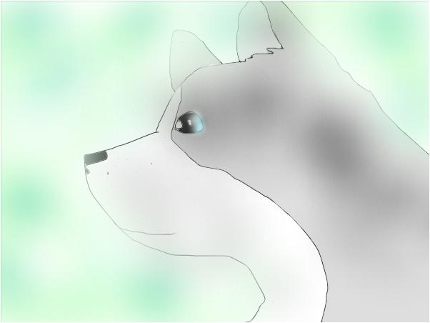 huskydoggeh
