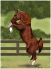 Rearing Arabian