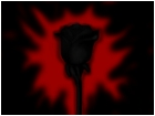 black rose 2#