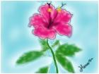 BEST flowerz :)
