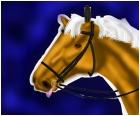 Sweet Emotion-Racehorse