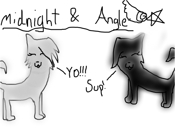 Midnight & Angle (REQUEST)