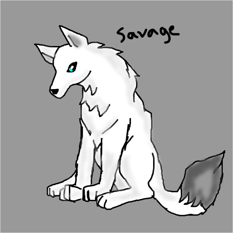 SAVAGE THE HUSKY WHITE FOX