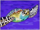 blue shelled turtle