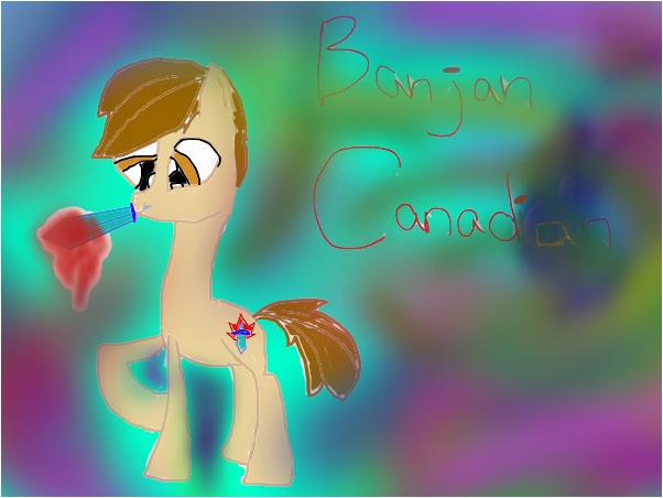 Bajan Canadian (pony version)