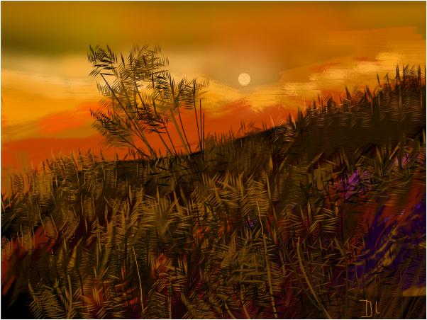 Grasses of Rainbow
