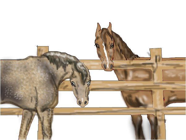 two lesson horses