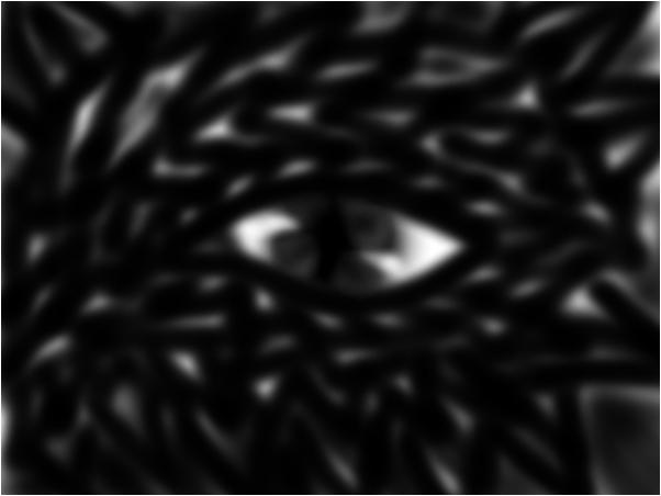 a dragon eye