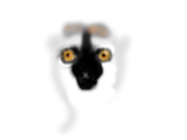 Strange lemur