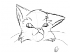 Warrior Cat Sketch