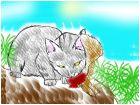 Feral Cat!