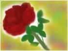 A really bad rose