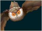Owl in Midflight