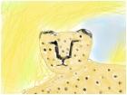 Cheetah in the rain