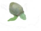 practice turtle