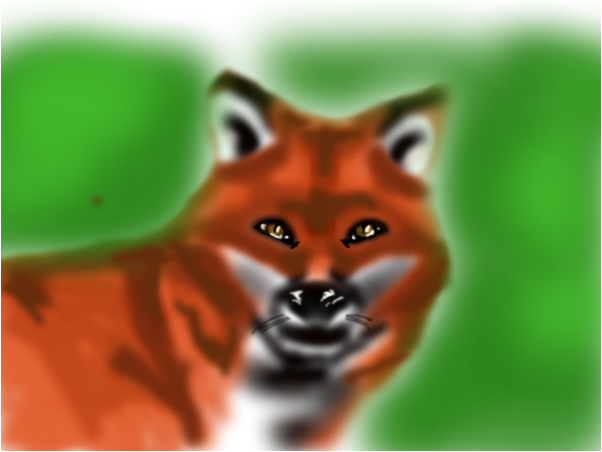 Fox practice