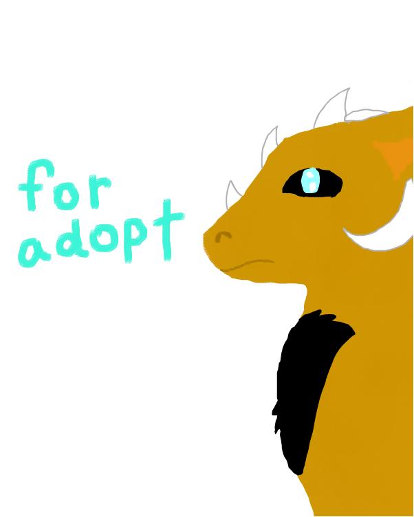 angel dragon for adopt