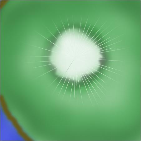 Kiwi Klash