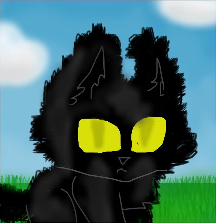 cutie fluffy cat