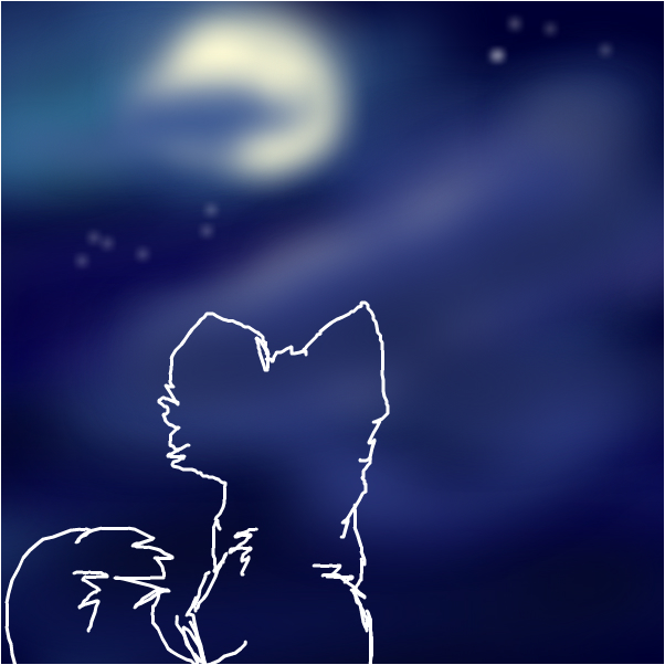 cat looking at the night sky