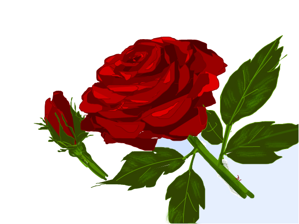 Just Another Red Rose