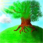 Дерево большое и бобое