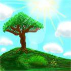 Драконье дерево