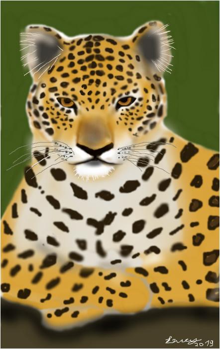 onça pintada  panther onca