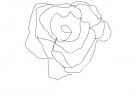 Rose kind of