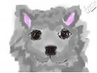 My dog spencer(R.I.P)