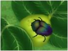 Fig & June Beetle