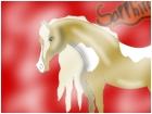 My horse Sapphire