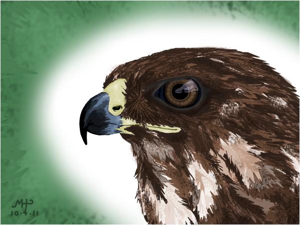 Hawk Head