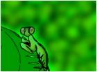 prang mantis